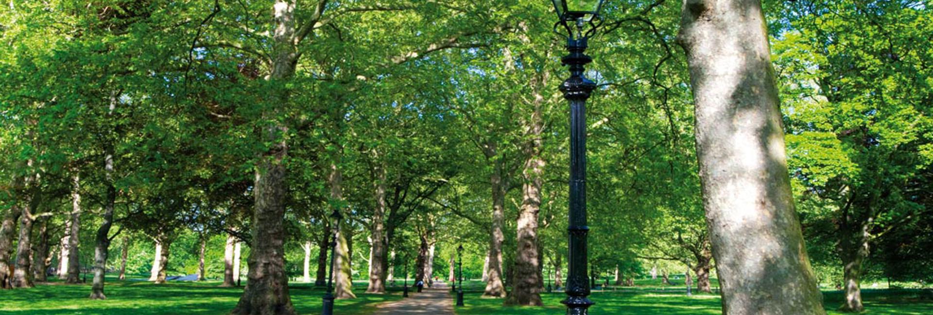 header-trees